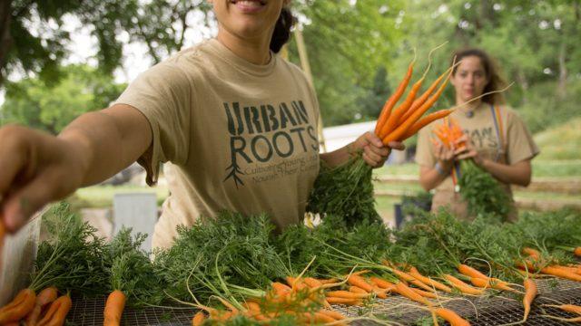 Shirene laying carrots